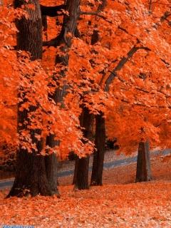 Красочные обои для нокии 6120, сделанные из фото осеннего парка